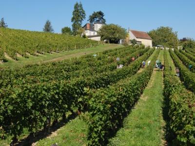 Noblaie Vineyard